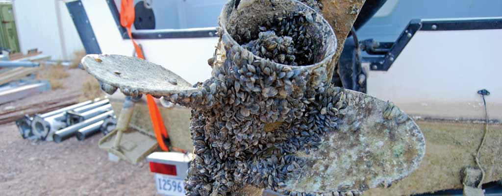 Invasive Species Boatus Foundation