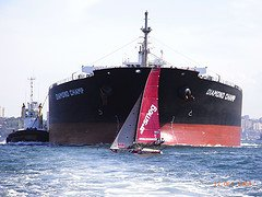 A racing sailboat just barely clears the bow of a 700 foot long freighter ship.